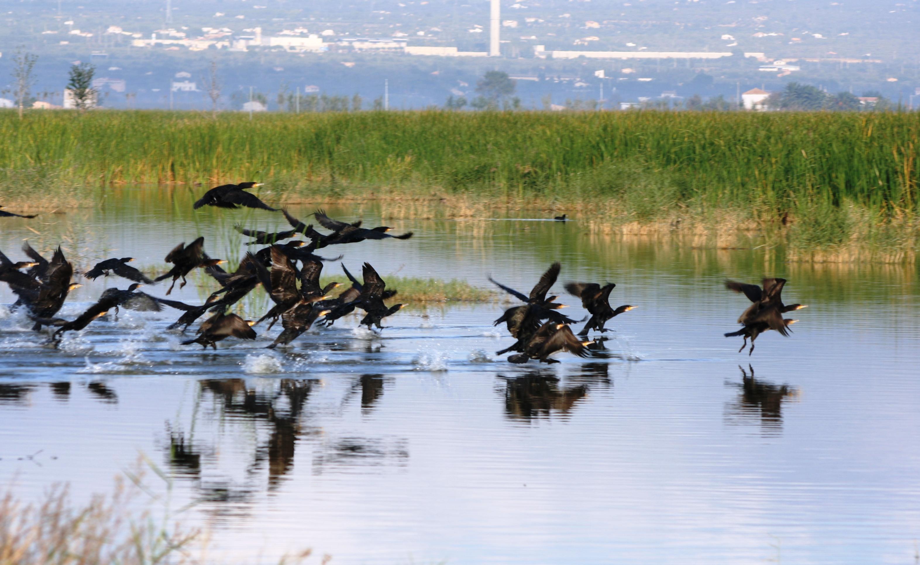 Cuidar de la biodiversidad para proteger nuestra salud