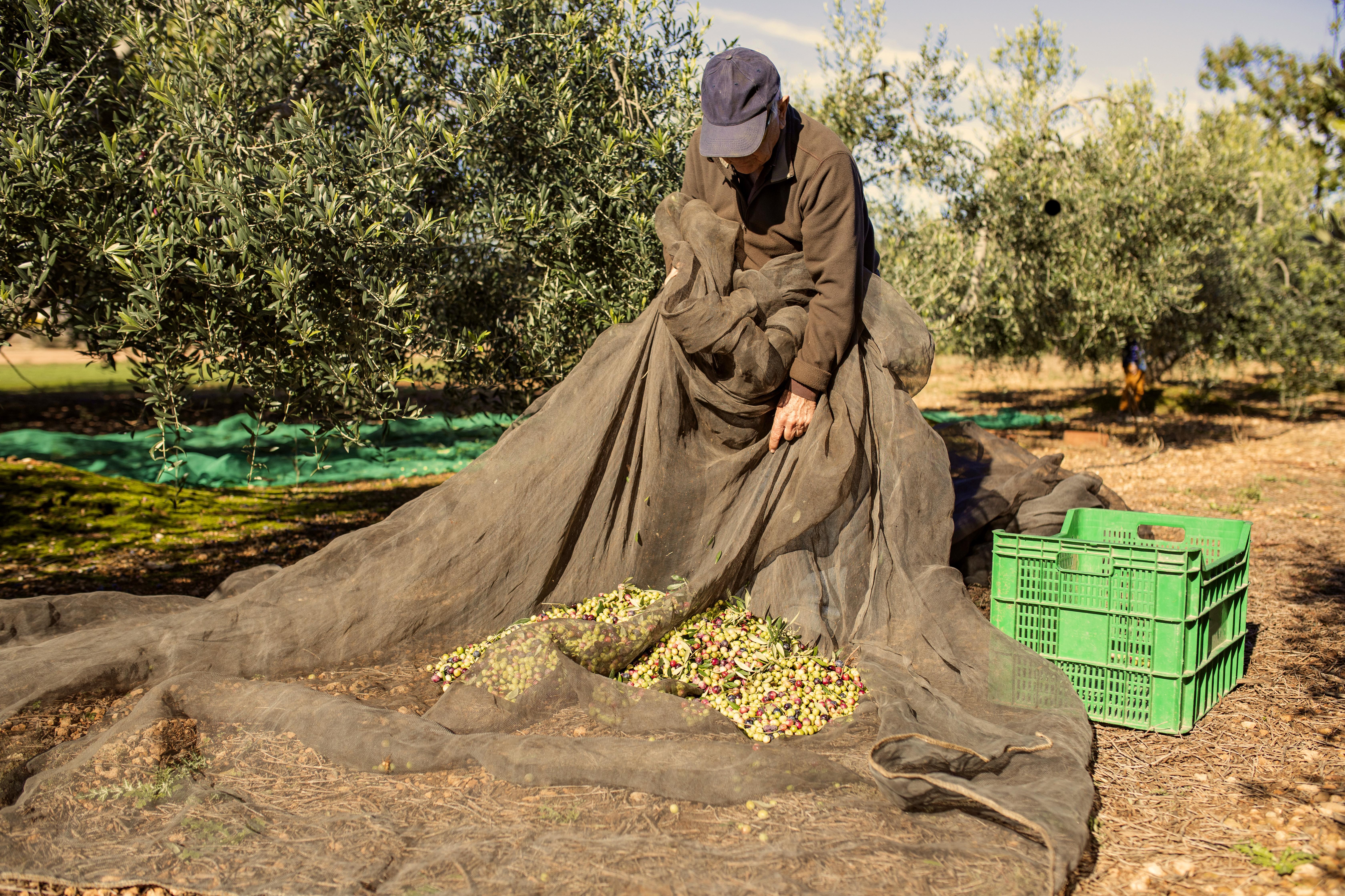 En marcha-Cómo fomentar la sostenibilidad de los productores locales